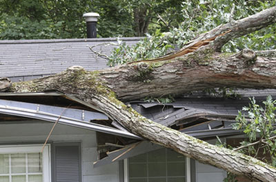 Tree collapse on roof in Saint Petersburg, FL